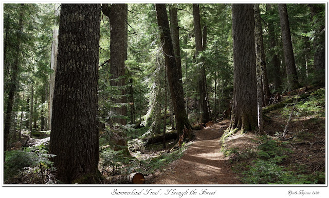 Summerland Trail: Through the Forest