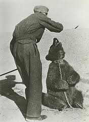 WW2 Iran bear cub Wojtek plays with Polish soldier