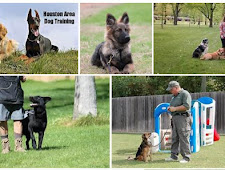 Learn All About Dog Care Here