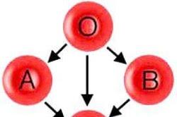 Kecocokan Karir Kamu Menurut Golongan Darah
