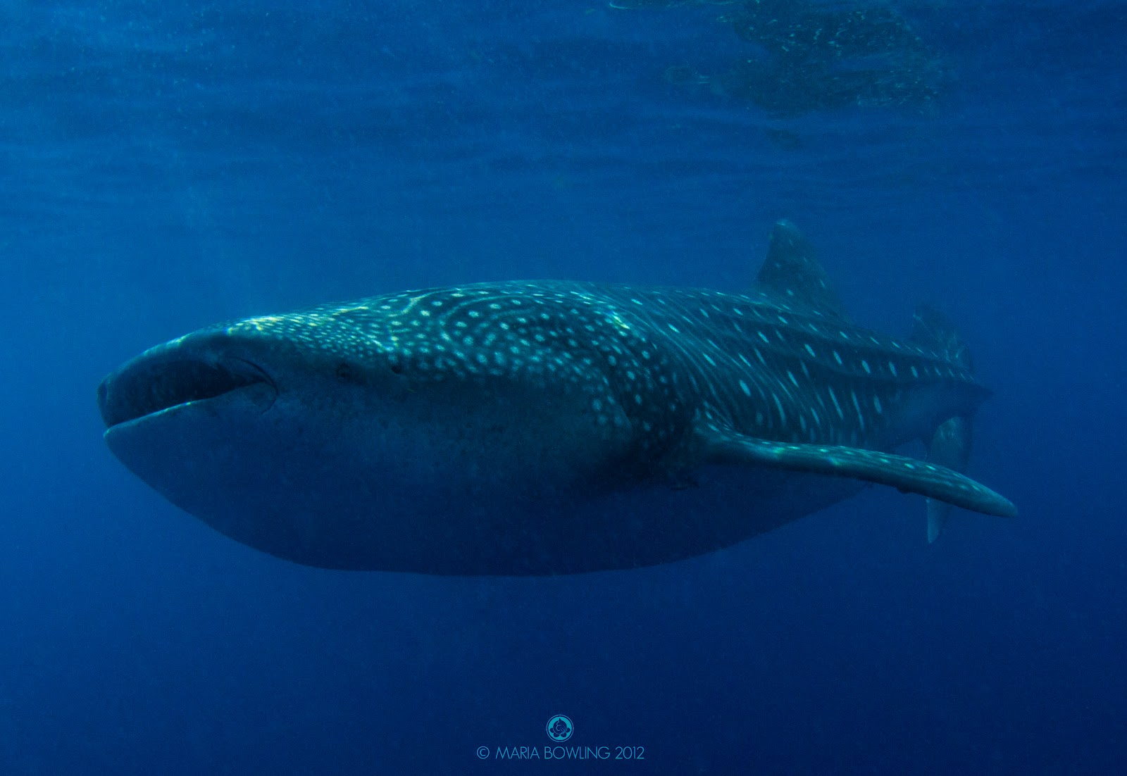 Aninimal Book: Inside Whale Shark Mouth