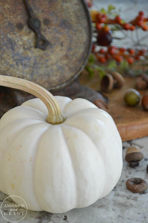 Classic white pumpkin for fall