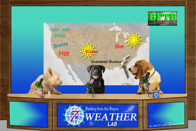 BFTB Weather set with three dogs anchoring the newscast