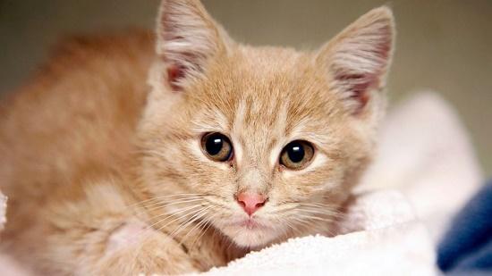 Usia Berapa Anak Kucing Membuka Mata