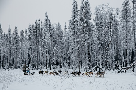 fotografia-nieve