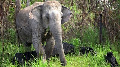 Ŝirmejo por elefantoj en Brazilo