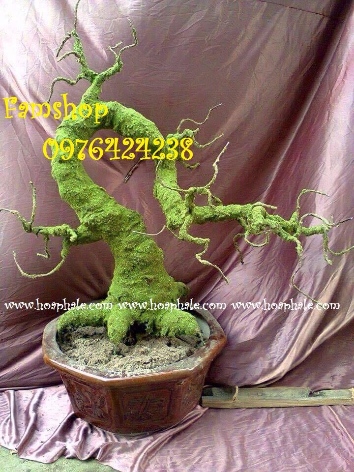 Goc bonsai mai dao tai Le Van Luong