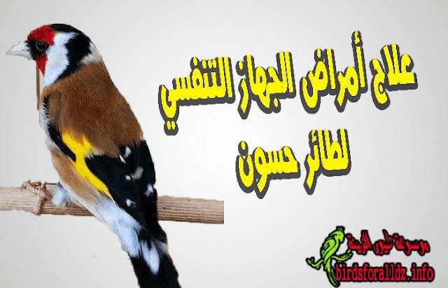 امراض الجهاز التنفسي لطائر الحسون اعراضها وعلاجها