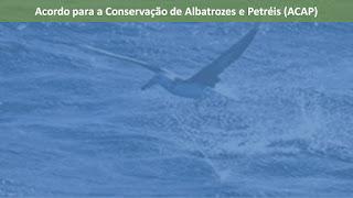 Acordo para a Conservação de Albatrozes e Petréis.