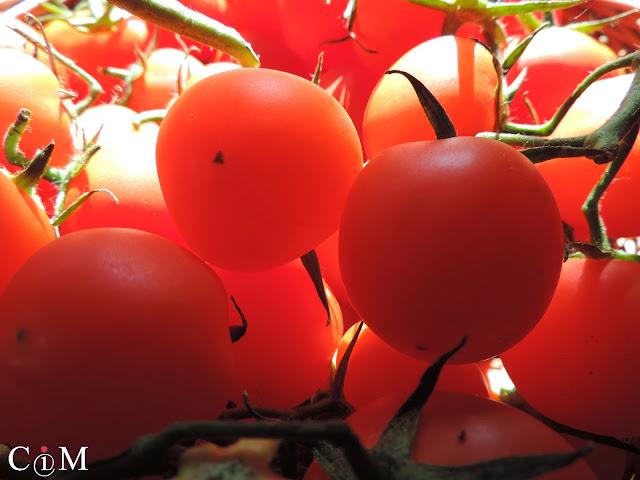 Polska, lato, pomidory