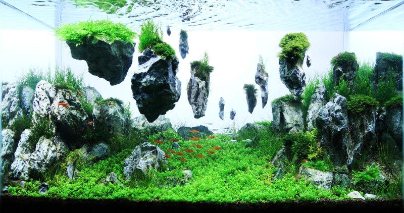 Hồ thủy sinh avatar