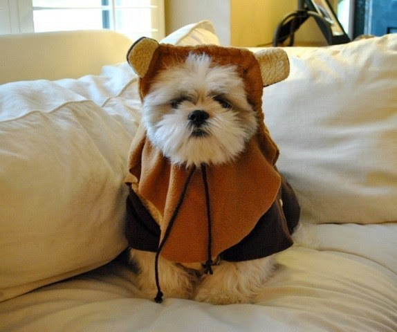 star wars pet costume-2