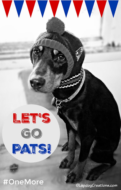 doberman mix rescue puppy wearing New England Patriots hat