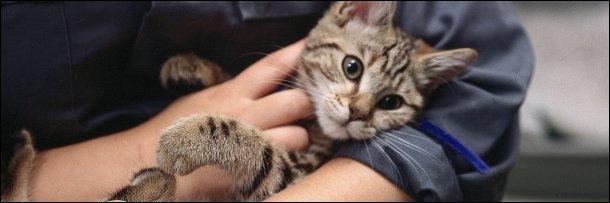 ستة تصرفات تثبت أن القطة حيوان شرير