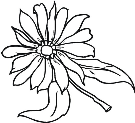 Pic Of Flowers Drawings