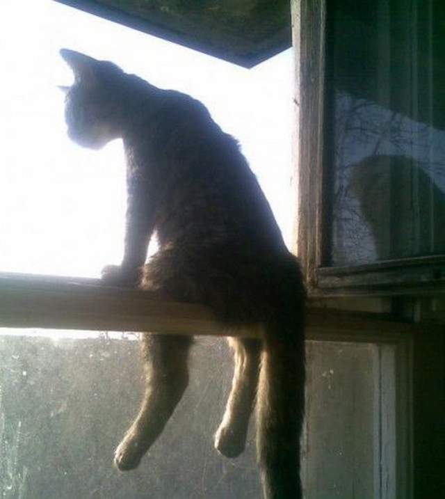 Funny cats - part 237, cute cat pictures, cat photos, best cat images