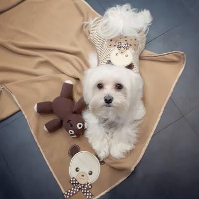 los juegos inteligentes del perro maltes