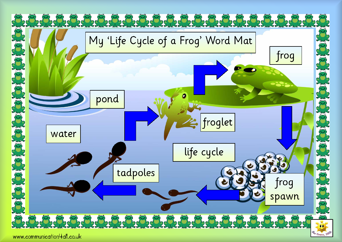 Life Cycle Of Frog October
