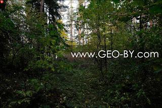 Лесной шалаш вдали по лесной тропе