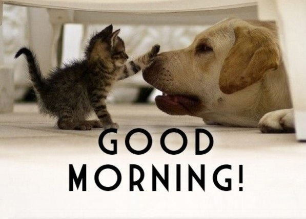 Good Morning Funny of Dogs and Cats