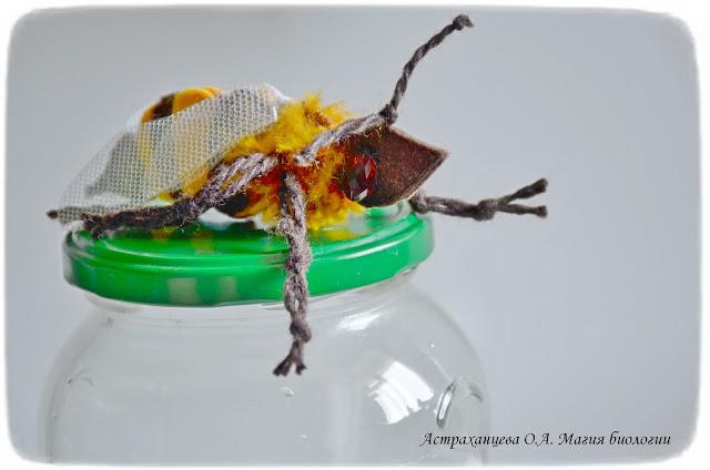 КОАПП_почему кусают насекомые_магия биологии, пчела