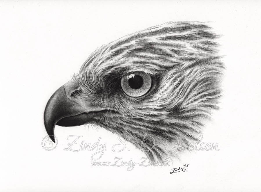 10-Hawk-Bird-Zindy-Nielsen-Fantasy-Animals-Meet-Realistic-Ones-www-designstack-co