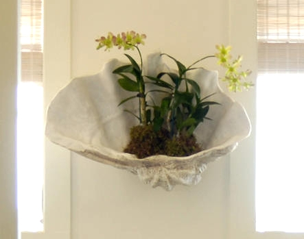 Clam Shell Wall Planter