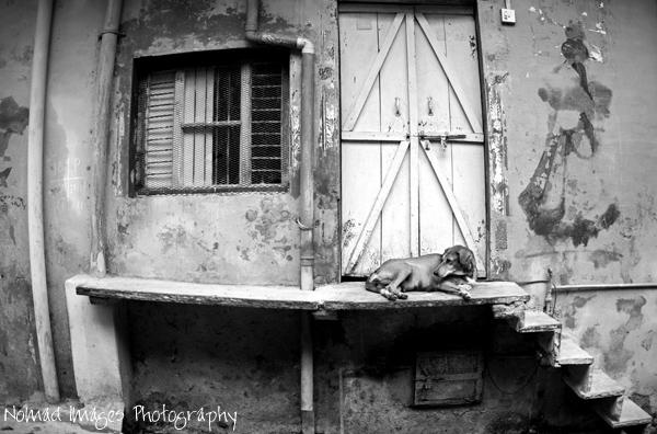 dog sleeps on city streets