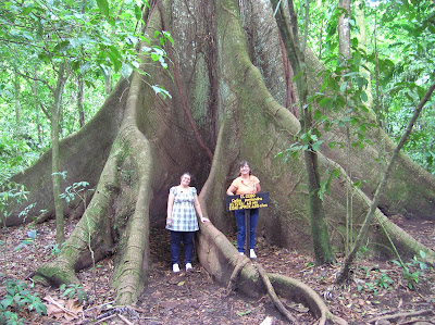 Ceibo gigante en Parque Arenal,La Fortuna, Costa Rica, vuelta al mundo, round the world, La vuelta al mundo de Asun y Ricardo, mundoporlibre.com