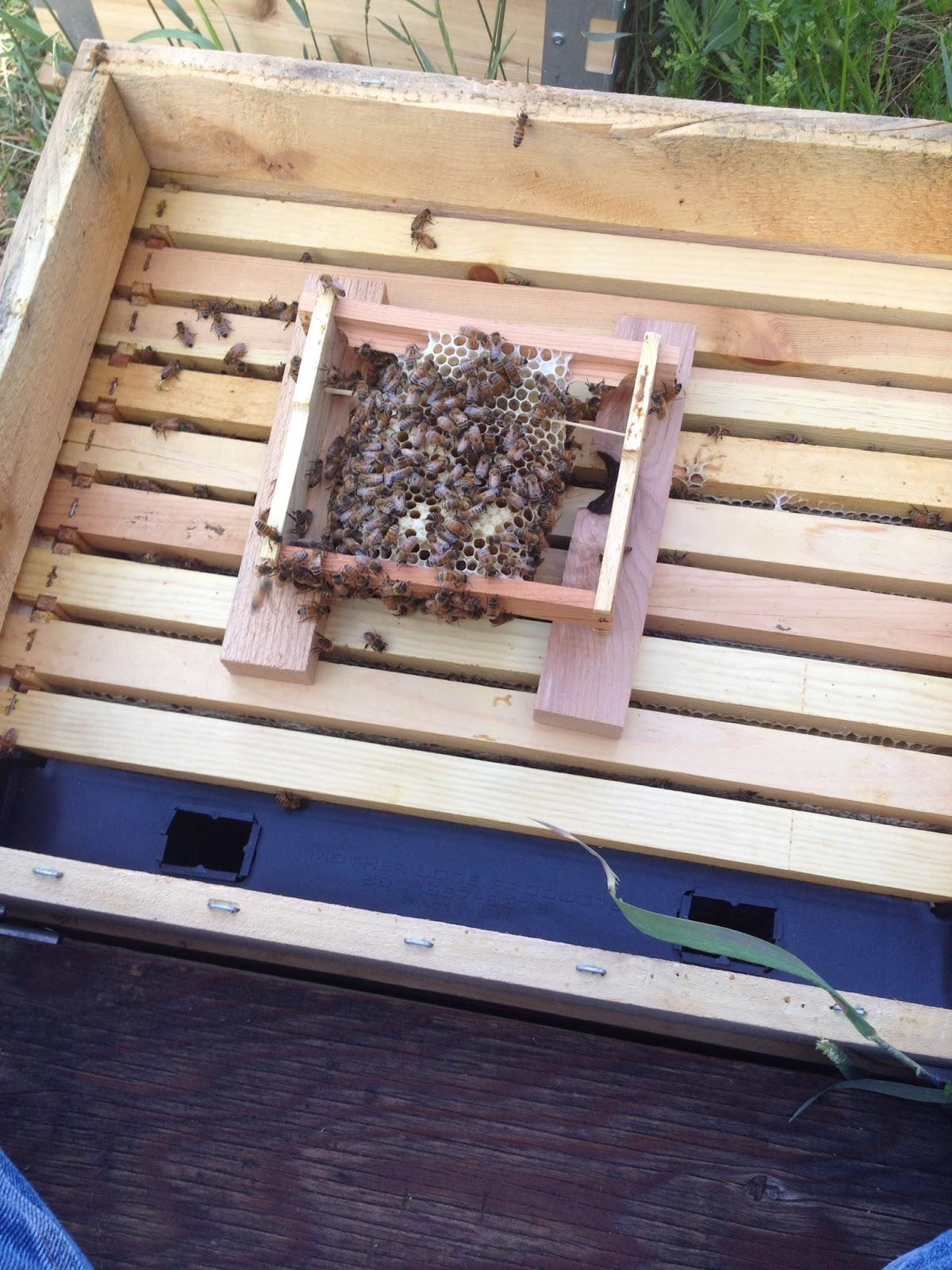 starting a mini urban beehive mub by albert chubak eco bee box
