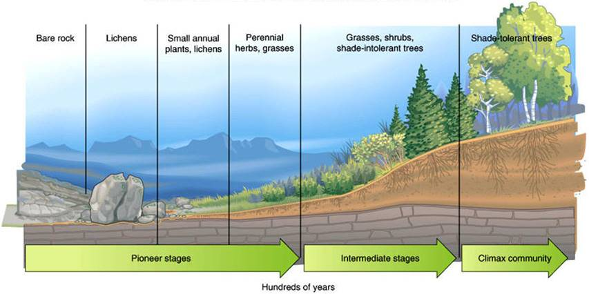 Environmental studies ecosystem succession primary succession the process of creating life in the area where no life previously existed publicscrutiny Choice Image