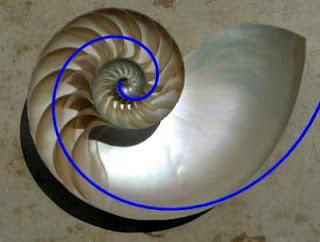 鵡螺的圖形