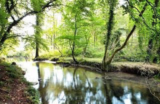 Ein schmaler Bach fließt durch einen Wald