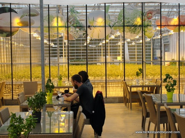 cafe at Fridheimar Greenhouse in Iceland