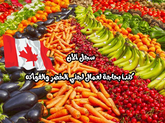 كندا بحاجة الى عمال لجني الفواكه – سجل الآن