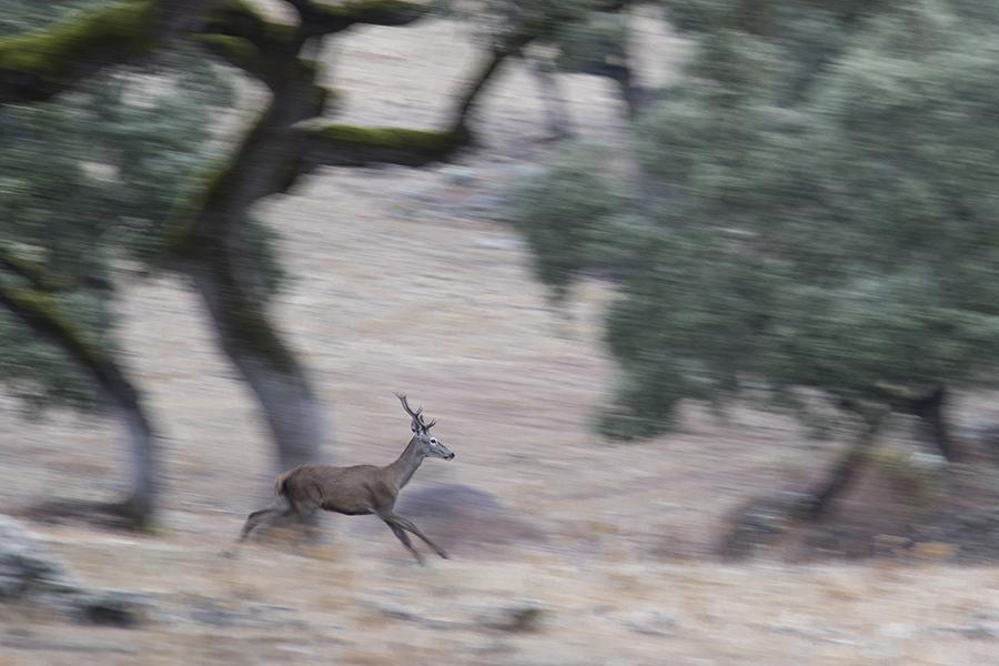 Ciervos en Cazorla