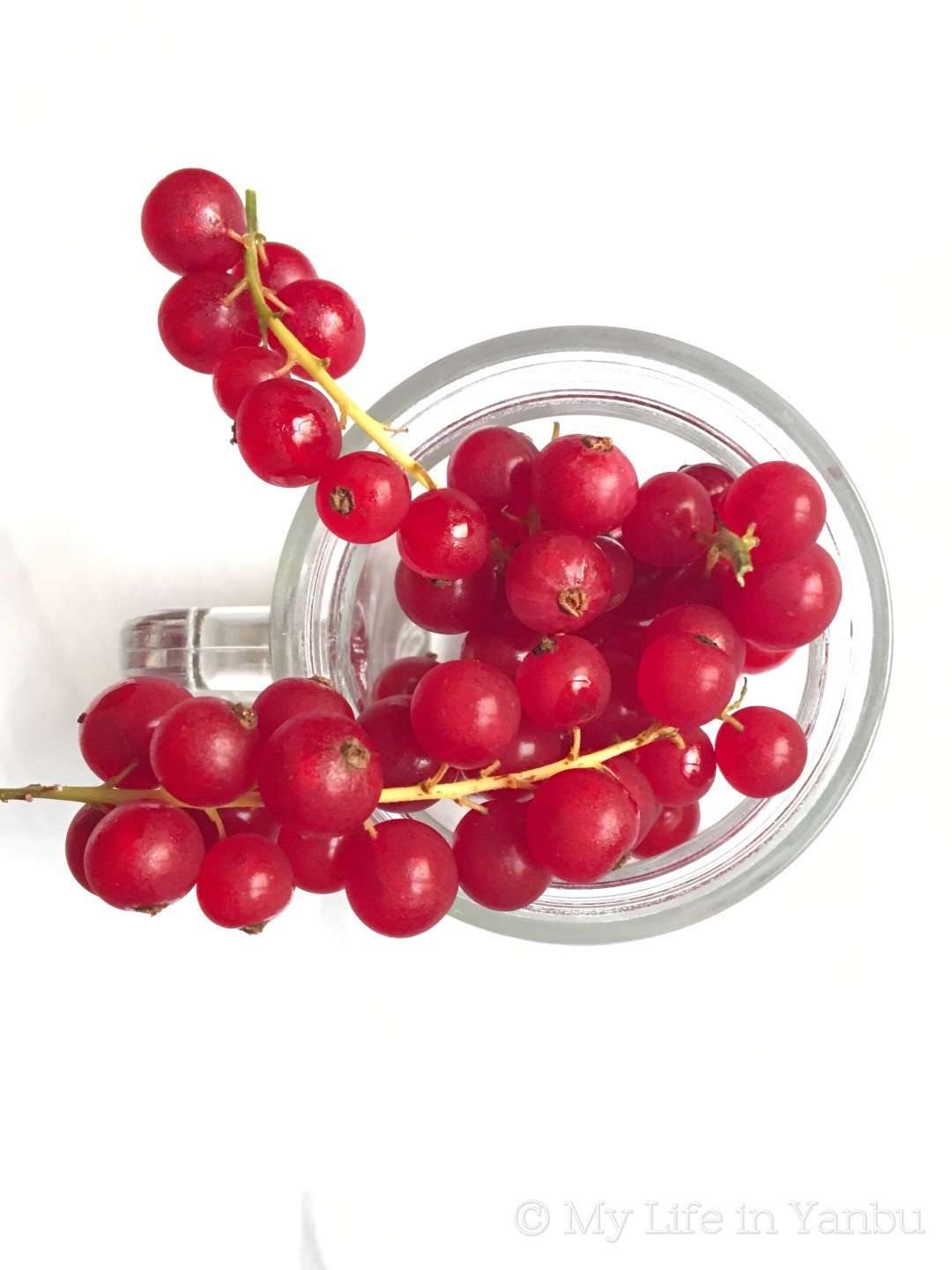 Red Currant Laban