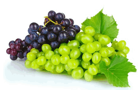 Frutas frescas (Imagem: Reprodução/Internet)