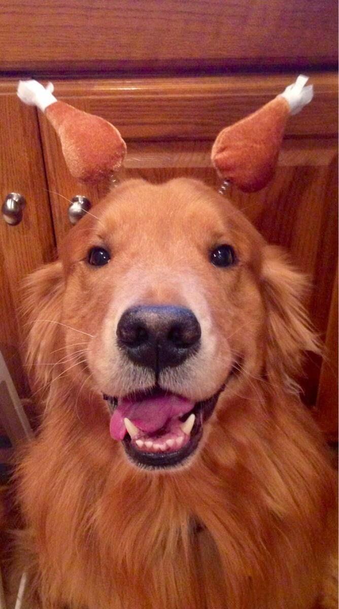 Cute dogs - part 49 (50 pics)   Amazing Creatures