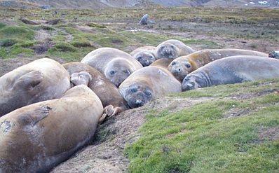 Seal pile