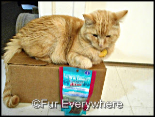 Carmine lays on a box with his paw on a bag of Natural Balance Perfect Bites Chicken Cat Treats.