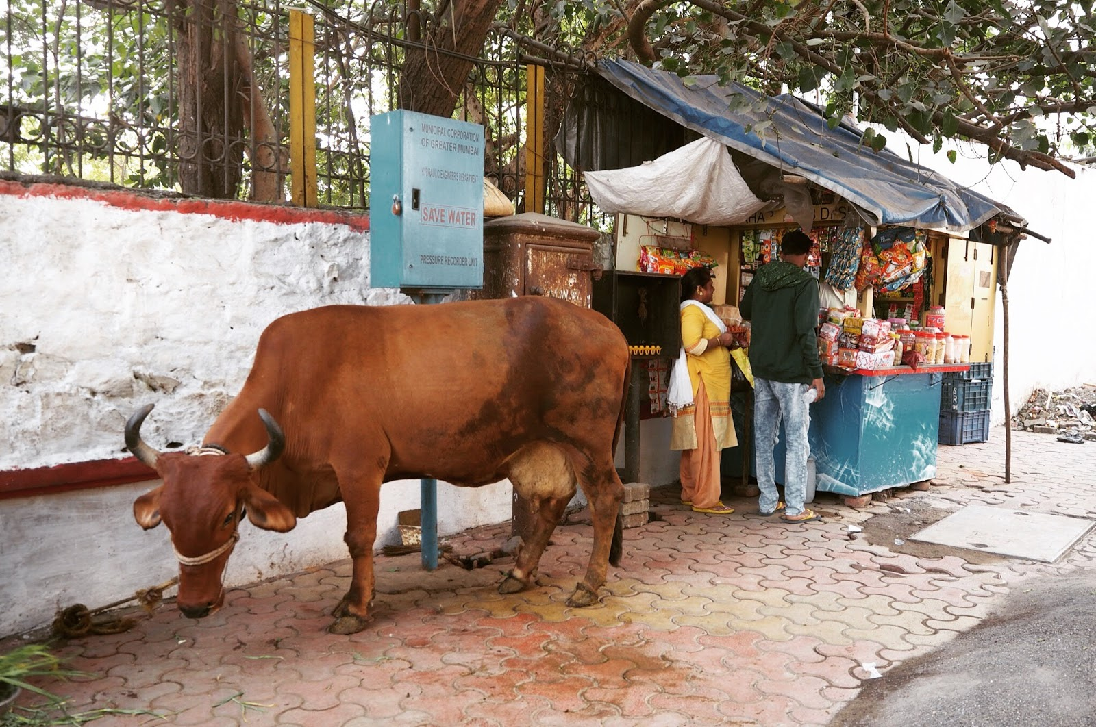 Holy cow, India, Mumbai