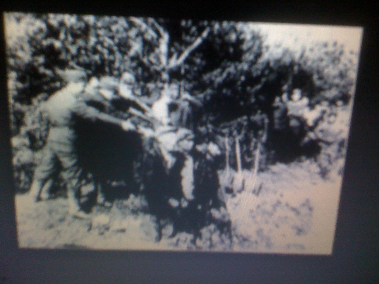 blacks in the holocaust - photo #22