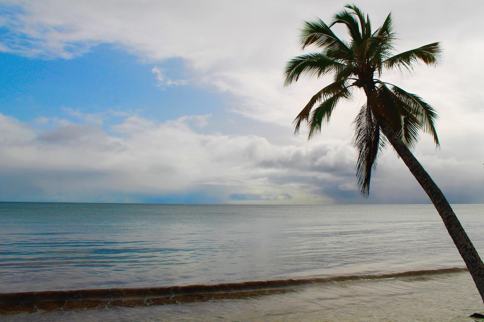 cocotier plage les salines martinique