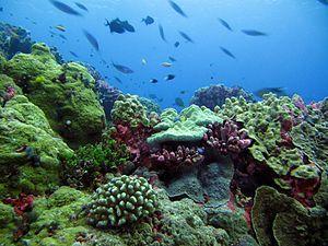 Coral Island Datu Severe Damage