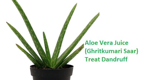 Aloe Vera Juice (Ghritkumari Saar) Treat Dandruff