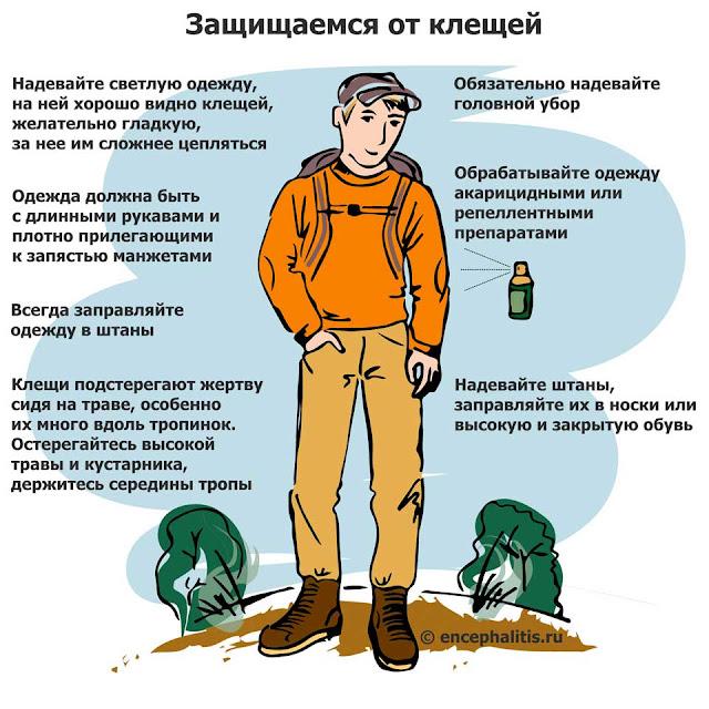 Количество случаев укусов клещей в России выросло в четыре раза