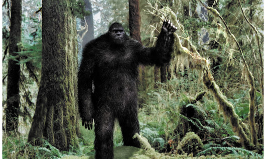 If officially discovered to be a type of Human, would Bigfoot have any rights?