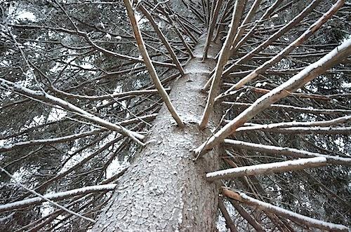 Jyväskylä: Ladun maja - Muurame