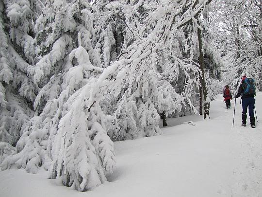 Śnieżne cuda przy szlaku.
